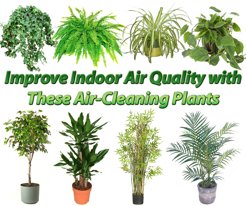 15 Air Cleaning Houseplants